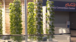 OTV | 50,000 Plants Donated
