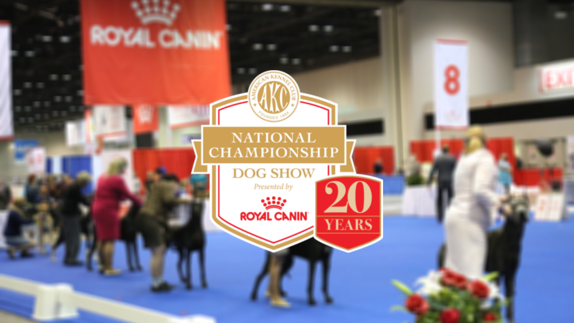 American Kennel Club logo on blurred out image of the AKC 2020 National Championship